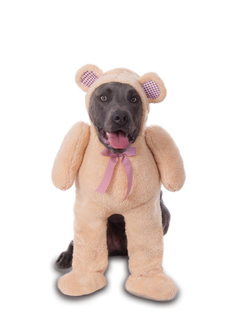Big Dog - Teddy Bear - Walking Costume for Pets