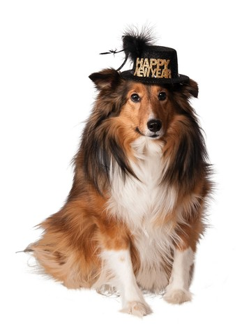 Happy New Year Accessory Hat For Pets