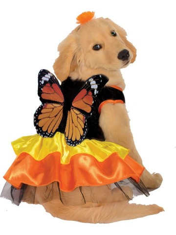 Pet Monarch Butterfly Costume